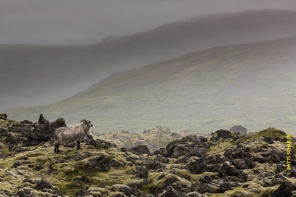 Iceland-20140722-3576.jpg