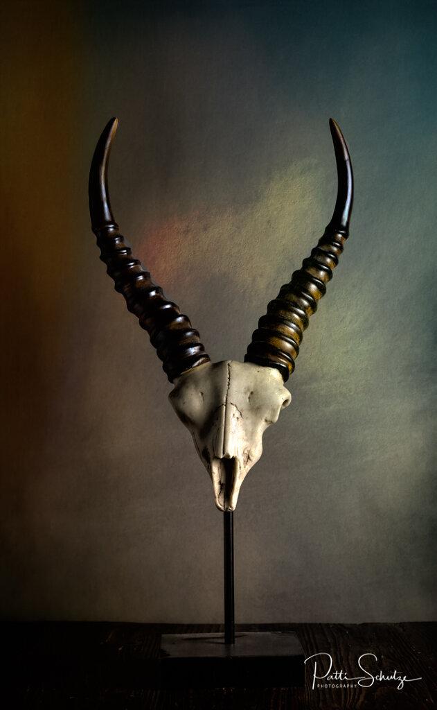 Black Buck Horn